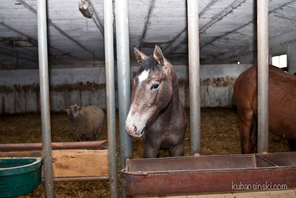 konie0010