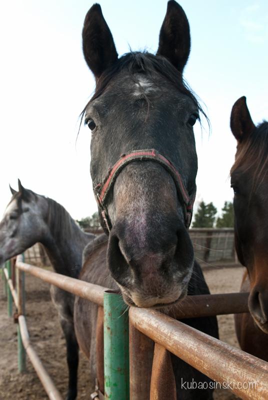konie0002