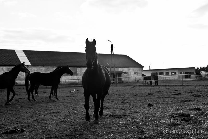konie0016