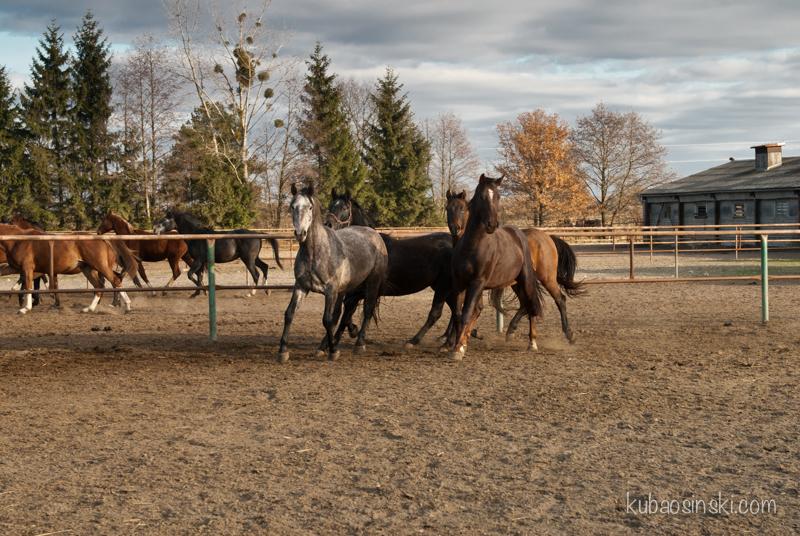 konie0019