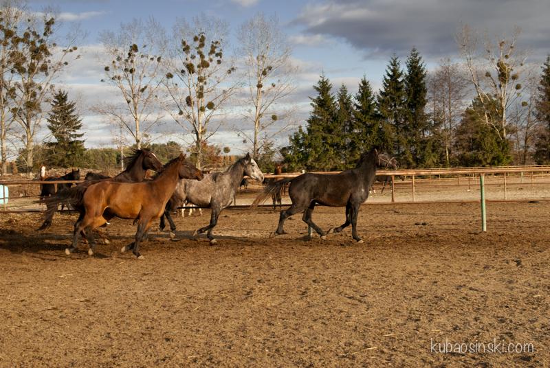 konie0020