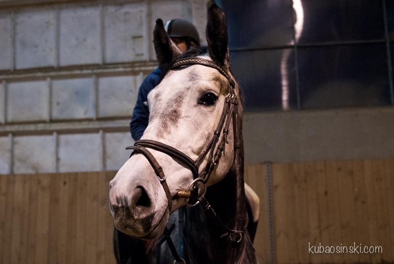 konie0036