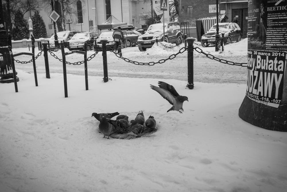 Lublin0004