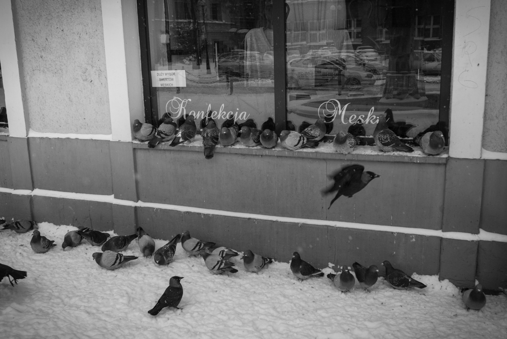 Lublin0005